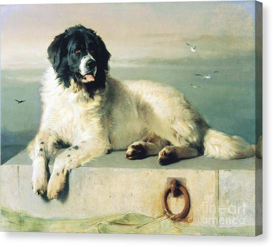 Landseer Canvas Print - Distinguished Member Of The Humane Society by Pg Reproductions