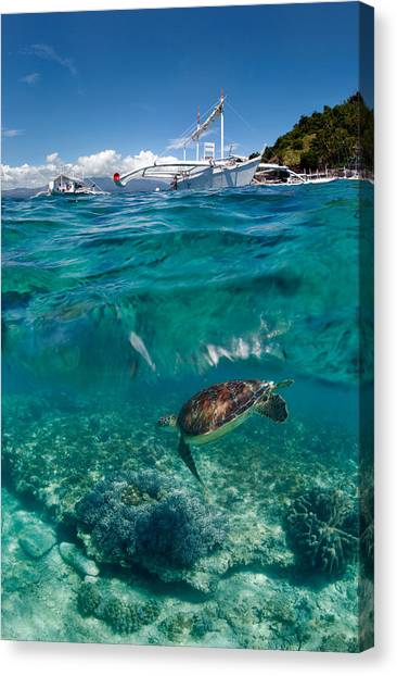 Catamarans Canvas Print - Dive To Philippines by Andrey Narchuk