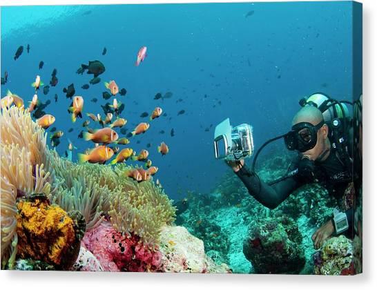 Anemonefish Canvas Print - Diver Photographing Anemonefish by Scubazoo