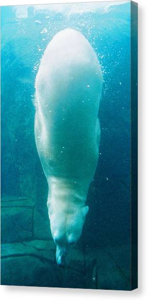 Diving Bear Canvas Print
