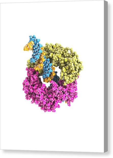 Molecule Canvas Print - Dna Clamp by Ramon Andrade 3dciencia