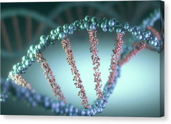 Dna Helix Canvas Print by Ktsdesign