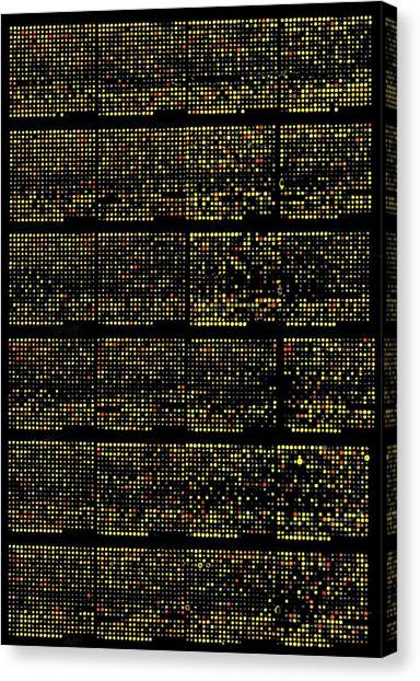 Genetics Canvas Print - Dna Microarrays by National Human Genome Institute