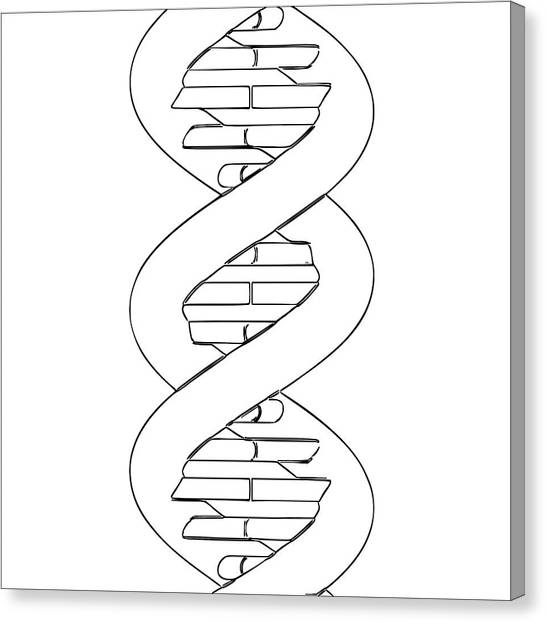 Biochemistry Canvas Print - Dna Molecule by Russell Kightley