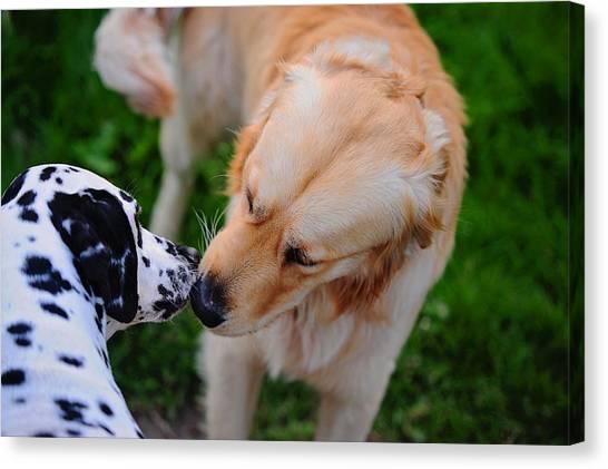 Dalmations Canvas Print - Do I Know You ? Meet Up With Friend.  Kokkie. Dalmation Dog by Jenny Rainbow
