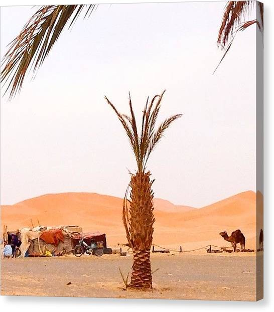 Sahara Desert Canvas Print - Do You Know What Day It Is? It's Hump by Blogatrixx