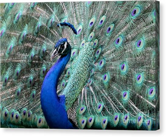 Florida Wildlife Canvas Print - Do You Like Me Now by Sabrina L Ryan
