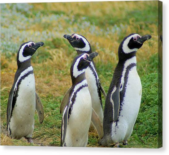Do You Smell That - Penguins Canvas Print by DerekTXFactor Creative