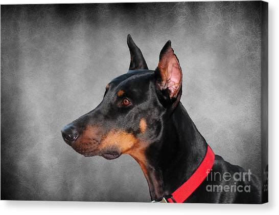 Doberman Pinschers Canvas Print - Doberman Pinscher by Paul Ward