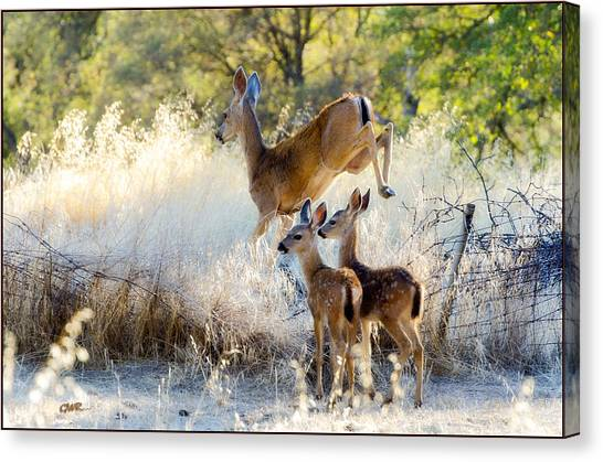 Doe And Fawns... Canvas Print