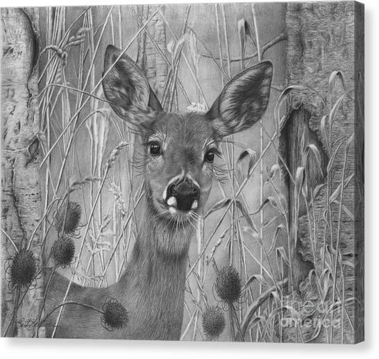 Doe Pretty Canvas Print