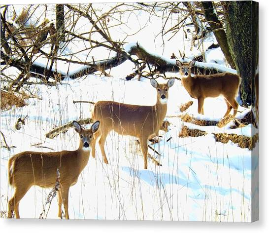 Does In The Snow Canvas Print