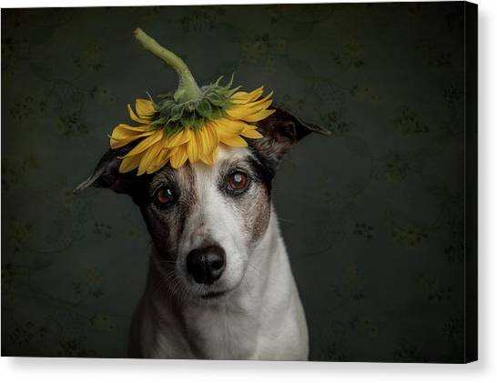 Lady Canvas Print - Does She Realize She Looks Like A Sunflower.... by Heike Willers