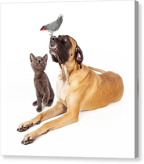Mastiffs Canvas Print - Dog And Cat Looking At A Bird by Susan Schmitz