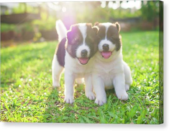 Dog And Puppies Canvas Print by Primeimages
