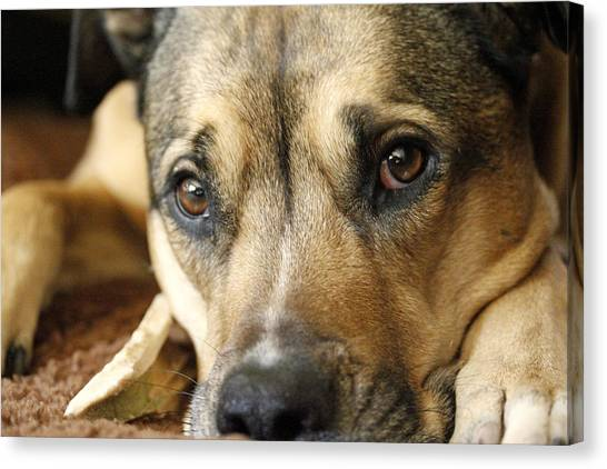 Dog Eyes Canvas Print