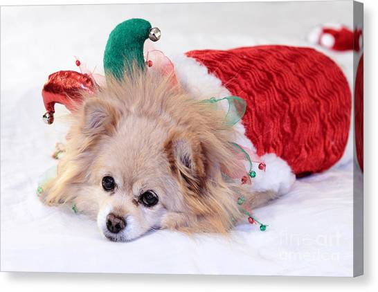 Dog In Christmas Costume Canvas Print