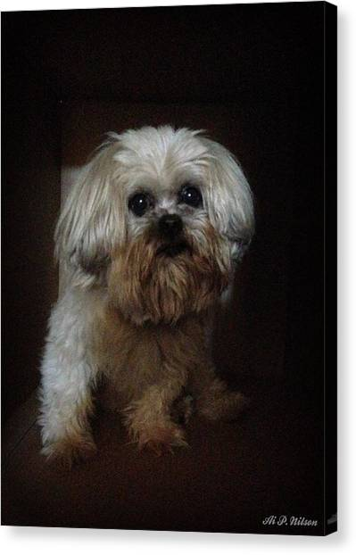 Dog In The Box Canvas Print