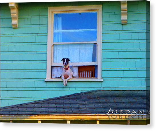 Dog In The Window Canvas Print by David Jordan