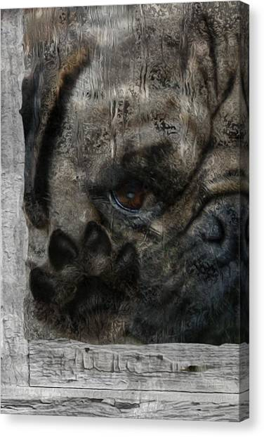 Imagery Canvas Print - Dog In The Window by Jack Zulli