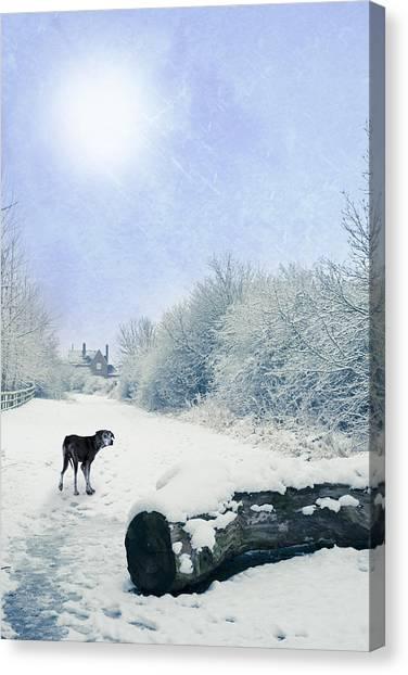 Dog Walking Canvas Print - Dog Looking Back by Amanda Elwell