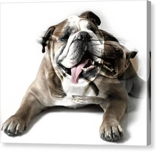 Dog Mastiff Canvas Print