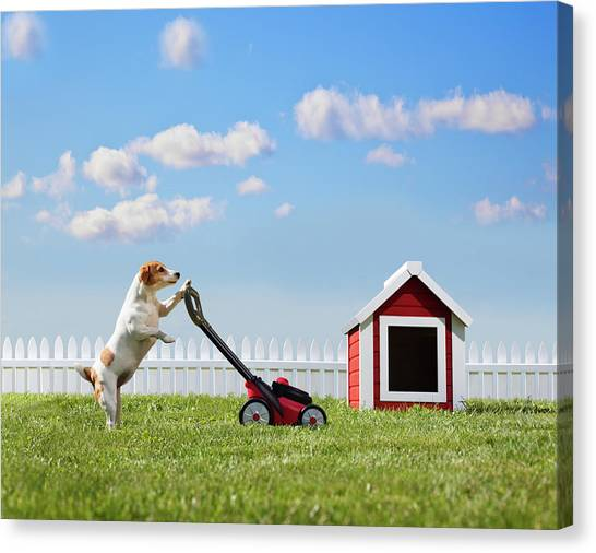 Dog Mowing Lawn Near Dog House Canvas Print by Pm Images