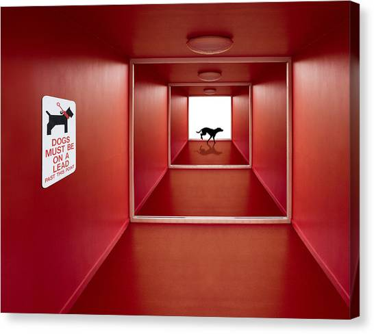 Tunnels Canvas Print - Dog On The Loose by Jacqueline Hammer