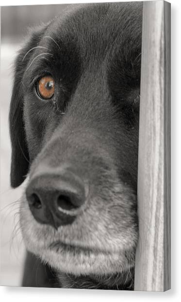 Dog Peek A Boo Canvas Print