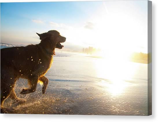 Dog Running On The Beach Canvas Print by Giovani Cordioli