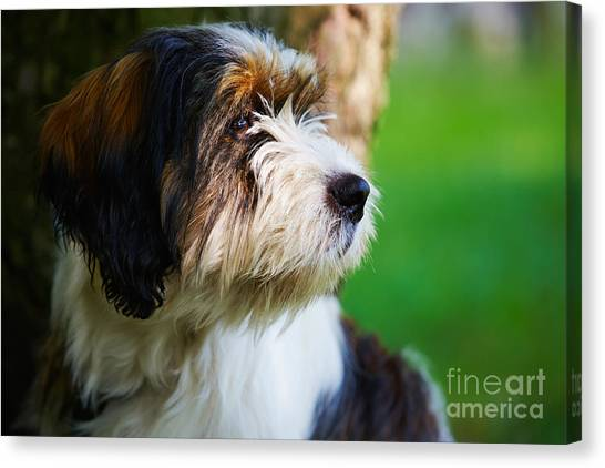 Dog Sitting Next To A Tree Canvas Print