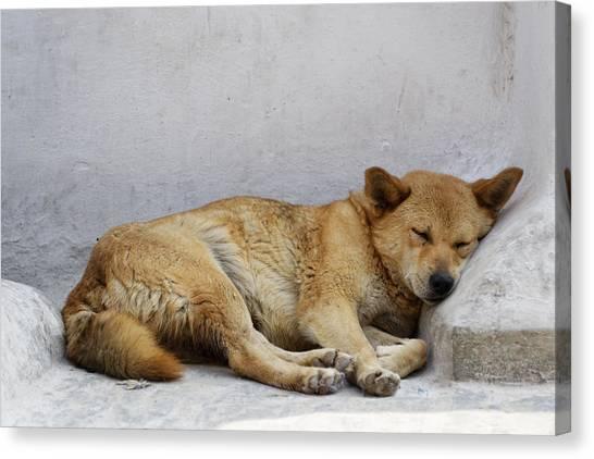 Dog Sleeping Canvas Print