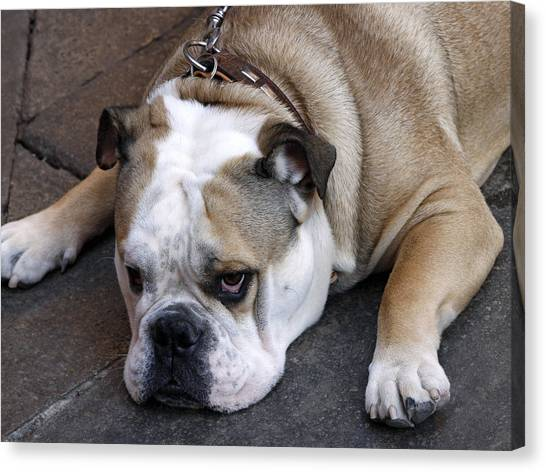 Canvas Print featuring the photograph Dog. Tired. by Rick Locke
