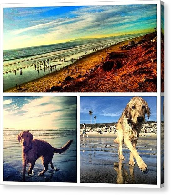 Golden Retrievers Canvas Print - #dogbeach #dogs #beach #meet #my #dog by Thewinery Wine