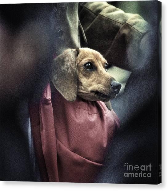 Doggie's Bag Canvas Print by Michel Verhoef