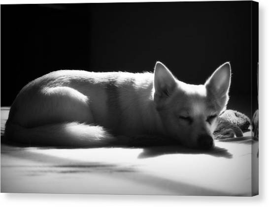 Doggy Dreamin' Canvas Print
