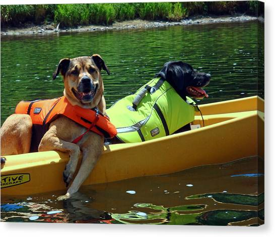 Dogs In A Kayak Canvas Print