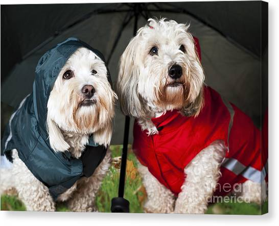 Small Mammals Canvas Print - Dogs Under Umbrella by Elena Elisseeva