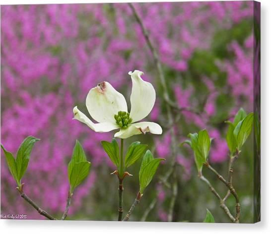 Dogwood Bloom Against A Redbud Canvas Print