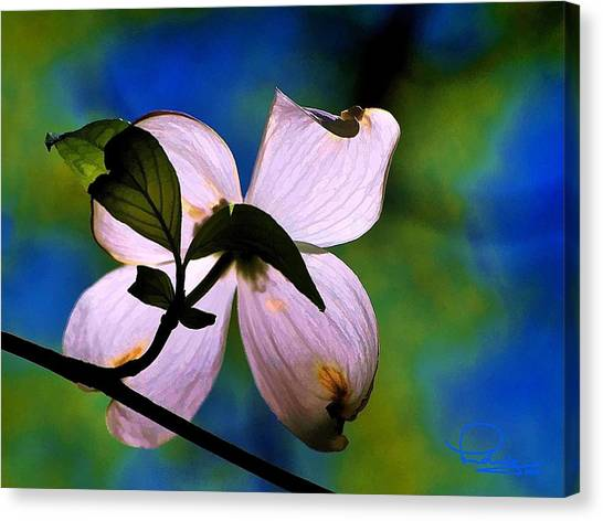 Dogwood Blossom Canvas Print