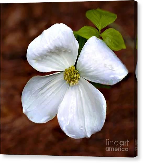 Dogwood Blossom Yosemite Canvas Print
