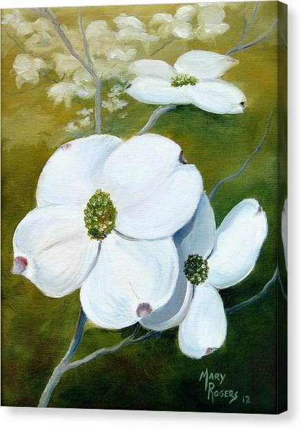 Dogwood Blossoms Canvas Print by Mary Rogers