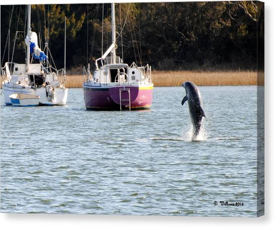 Dolphin In Taylors Creek Canvas Print