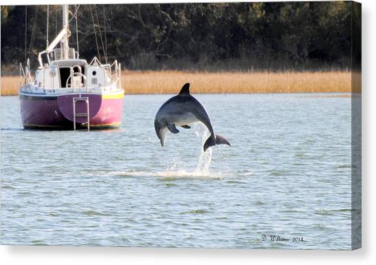 Dolphin Jumping In Taylors Creek Canvas Print