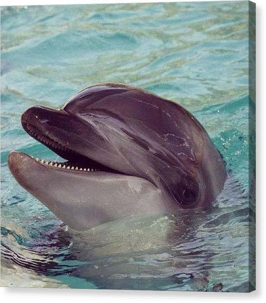Berlin Canvas Print - Dolphin Love by Berlin Green