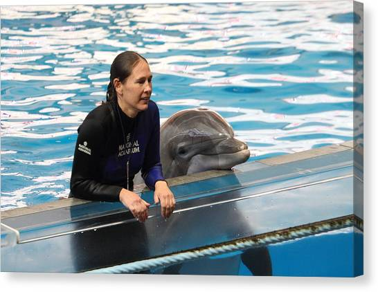 Dolphin Show - National Aquarium In Baltimore Md - 1212230 Canvas Print by DC Photographer