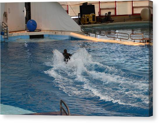 Dolphin Show - National Aquarium In Baltimore Md - 1212245 Canvas Print by DC Photographer