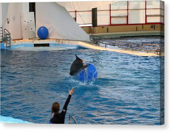 Dolphin Show - National Aquarium In Baltimore Md - 121241 Canvas Print by DC Photographer