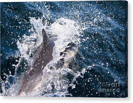 Dolphin Splash Canvas Print