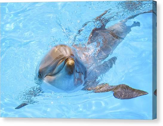 Dolphin Swimming Canvas Print